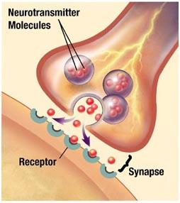 Sinapsi biochimica