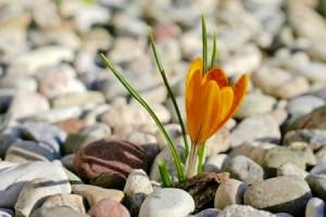 Corso Mindfulness per pazienti oncologici ed i loro familiari