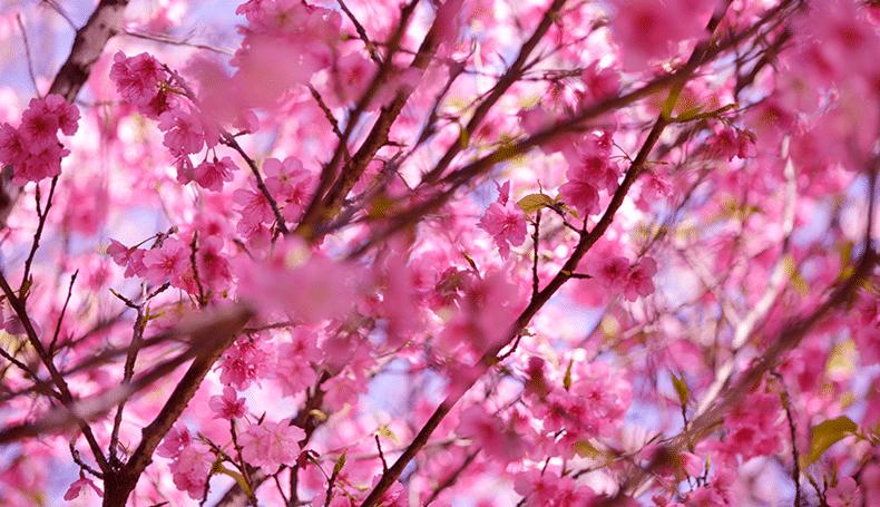 È primavera. Ecco perché la natura ci fa bene