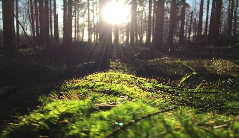 Effetti positivi di una visita virtuale in un bosco