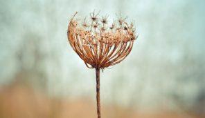 Nuova Ricerca: La Mindfulness Migliora I Sintomi ADHD Negli Adulti