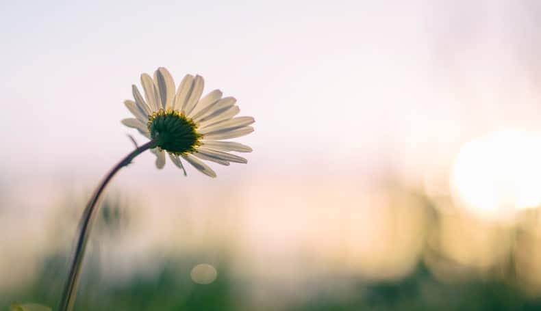 Mindfulness E Dolore Sociale