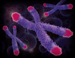 telomeri e depressione