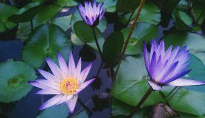 Mindfulness E Rilassamento