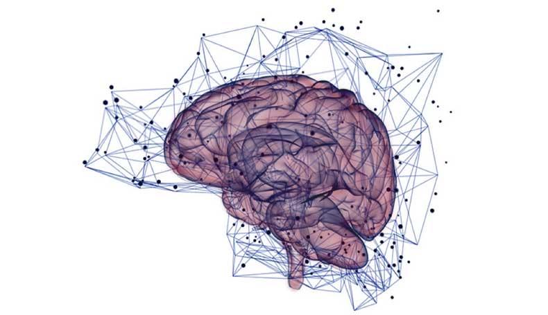 Cervello dell'adolescente