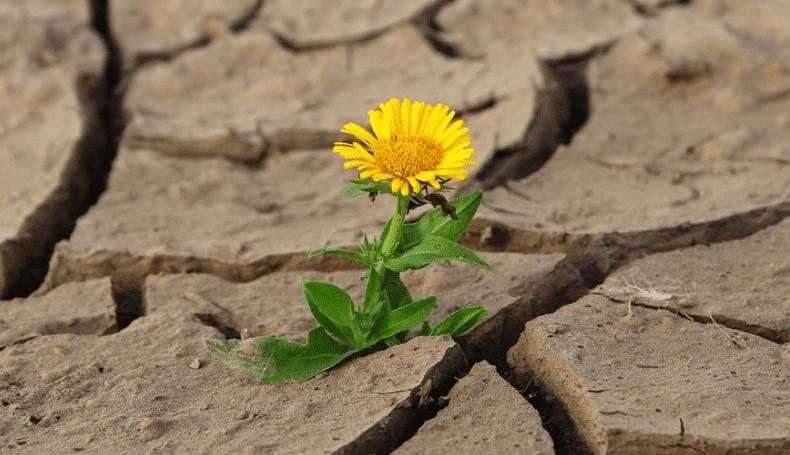 Trauma E PTSD: Correlati Psicologici – Sistemi Di Funzionamento – Basi Di Intervento