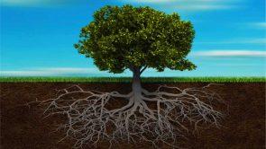 Trauma: Definizione – Etiopatogenesi – Conseguenze Sul Cervello E Principali Quadri Psicopatologici
