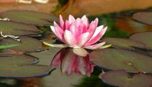 Imparare A Gestire La Paura Con La Mindfulness