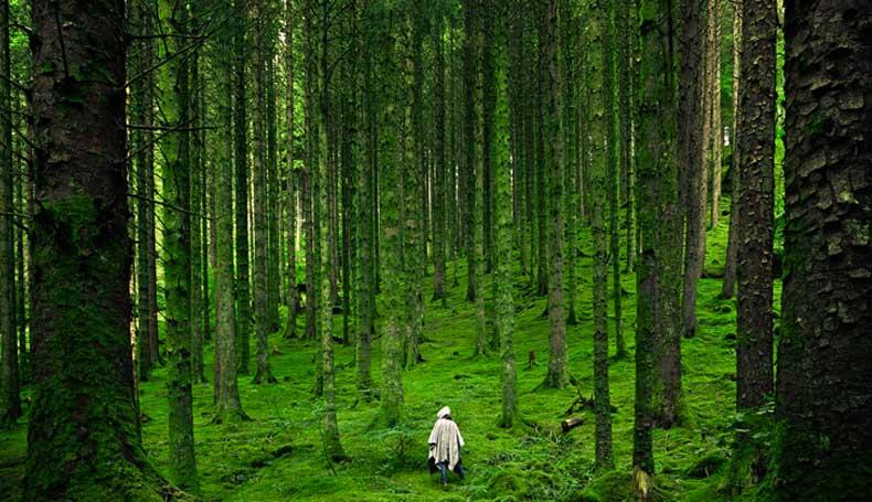 Terapia della Foresta contro la Depressione