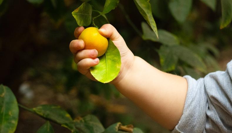 Genitorialità Consapevole E Alimentazione Emotiva In Adolescenza