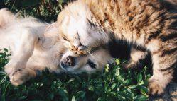 L'impatto Che La Morte Di Un Animale Domestico Ha Sulla Salute Mentale Di Un Bambino: è Meglio Aver Amato E Perso Piuttosto Che Non Aver Amato Affatto?